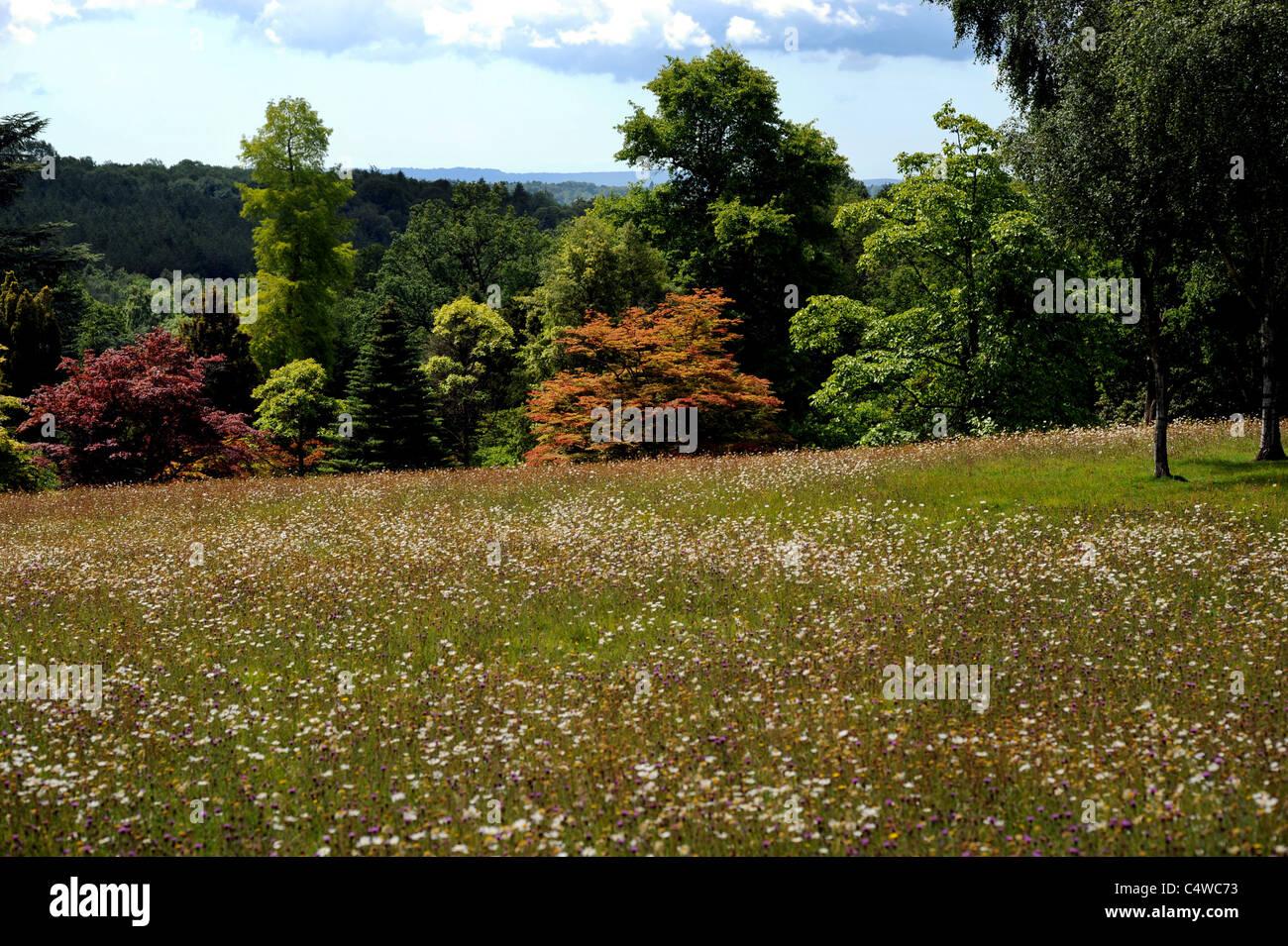 High Beeches Garden Stock Photos & High Beeches Garden Stock Images ...