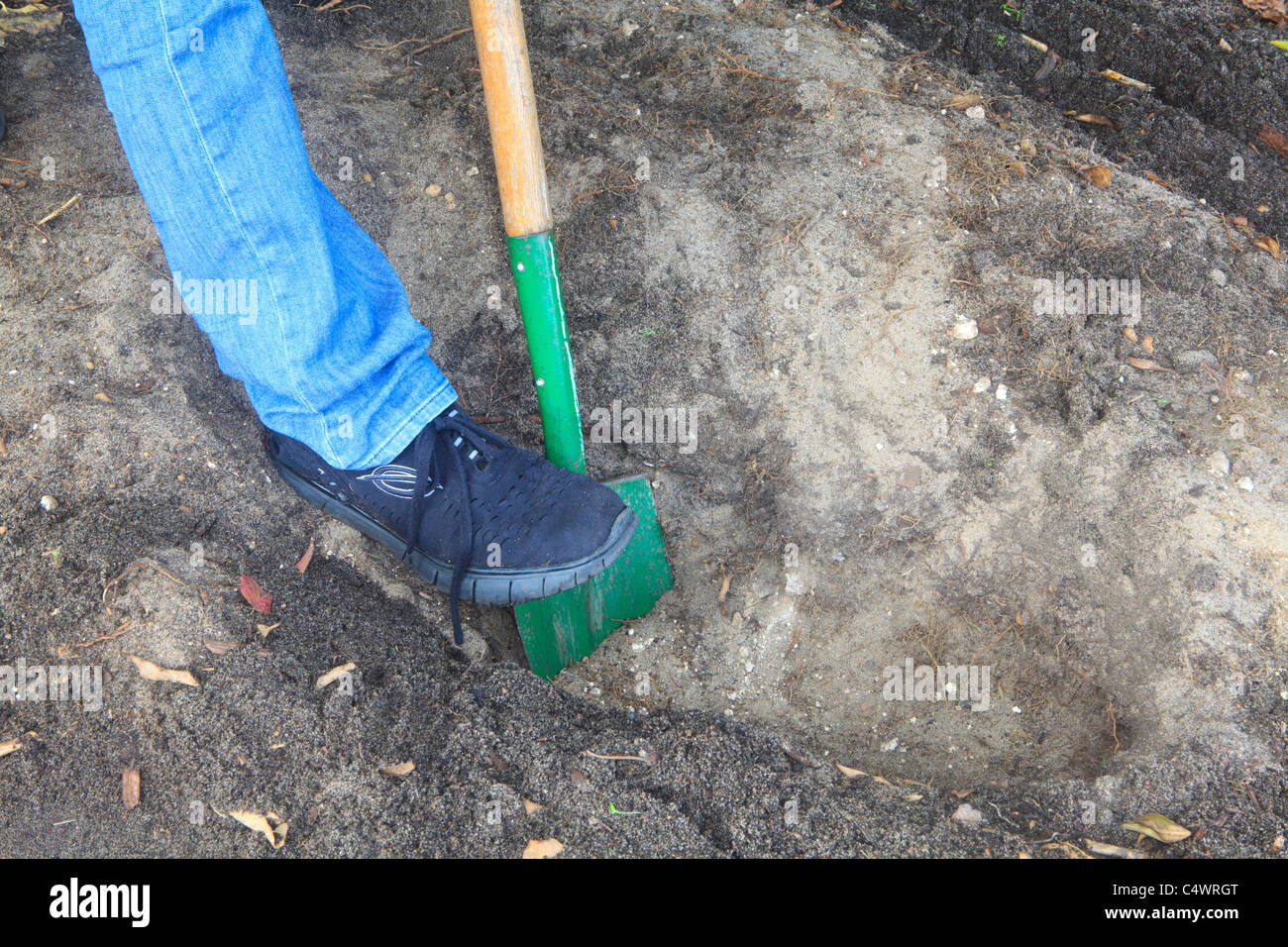 Digging the trench. Part 2 of Trench Composting to improve soil quality series of images. - Stock Image