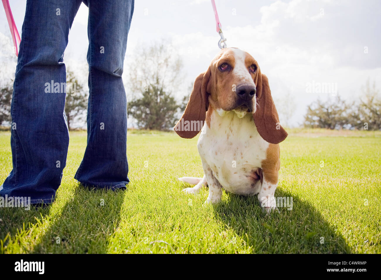 USA, Colorado, woman with dog on lawn - Stock Image
