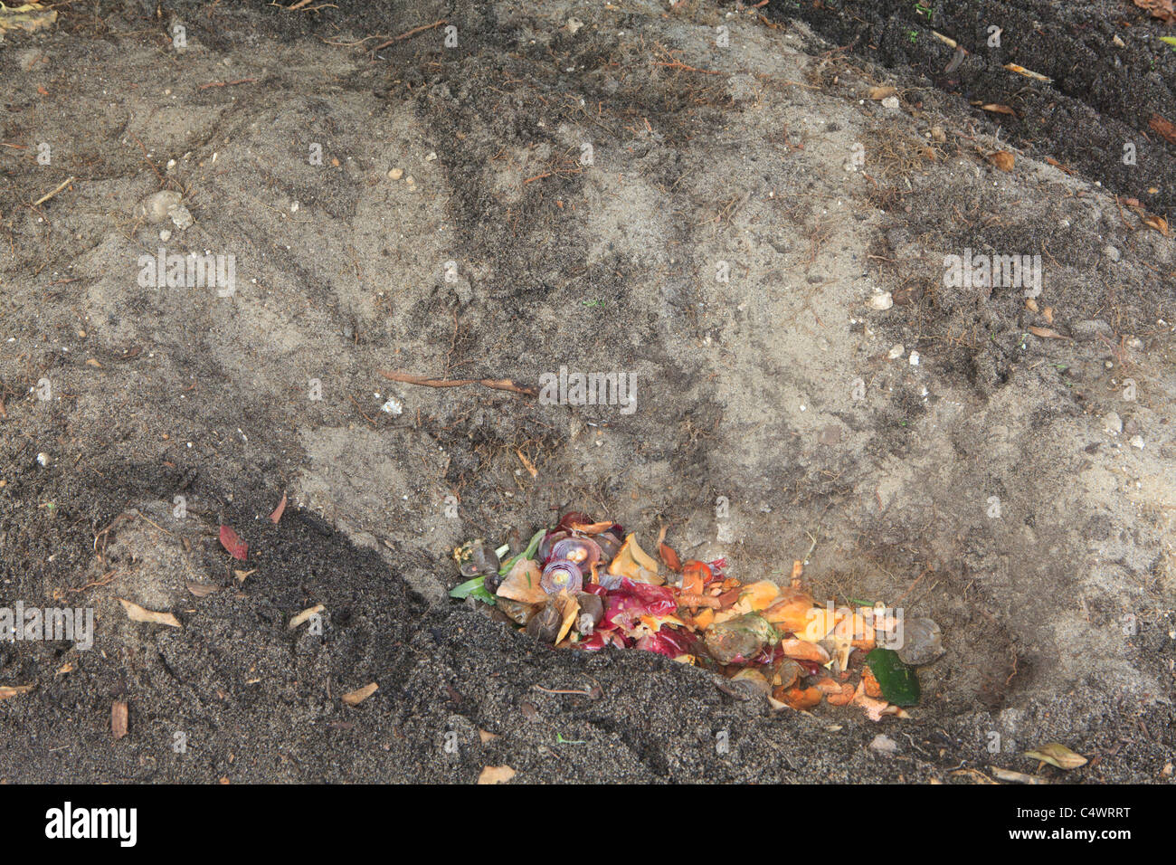 Kitchen scraps in the trench. Part 4 of Trench Composting to improve soil quality series of images. - Stock Image