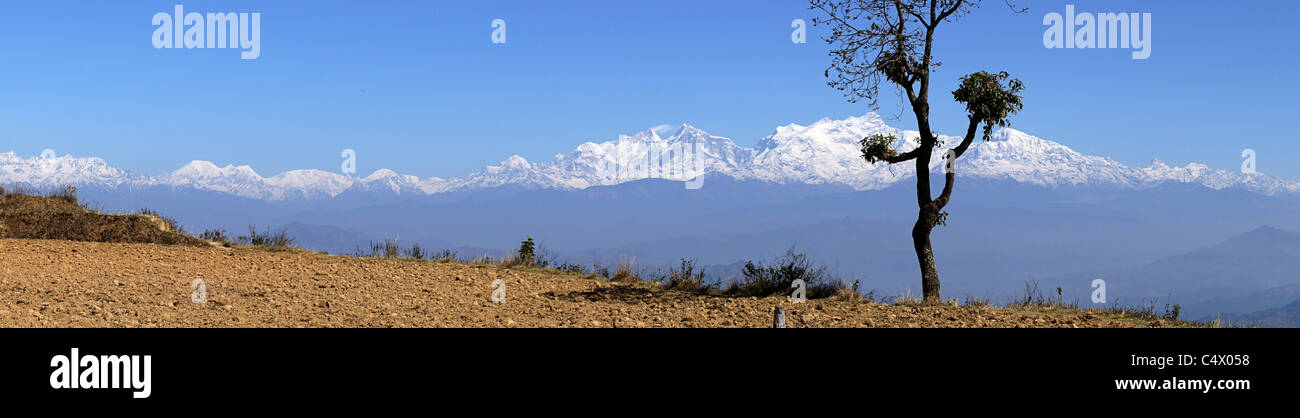 Panorama of the snow covered the Annapurna Range with a tree in the foreground, Bandipur, Western Region, Nepal - Stock Image