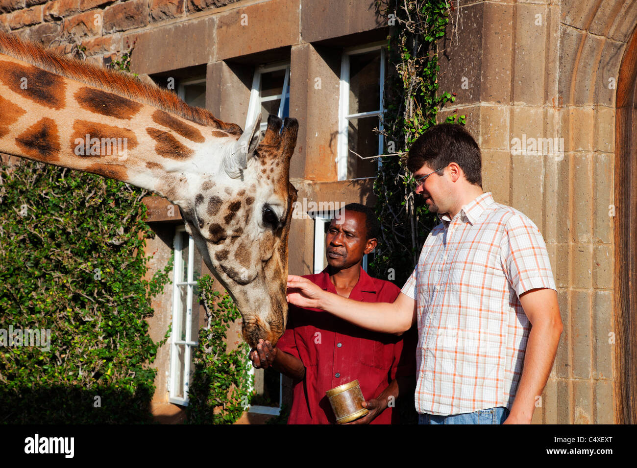 Rothschild Giraffe (Giraffa camelopardalis rothschildi) Is one of 9 subspecies of giraffe.Griaffe Manor Kenya. Dist. - Stock Image