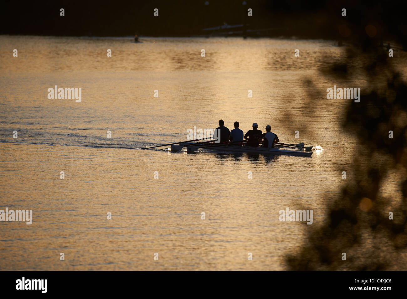 Rowing team on the Milton reach of the Brisbane river - Stock Image