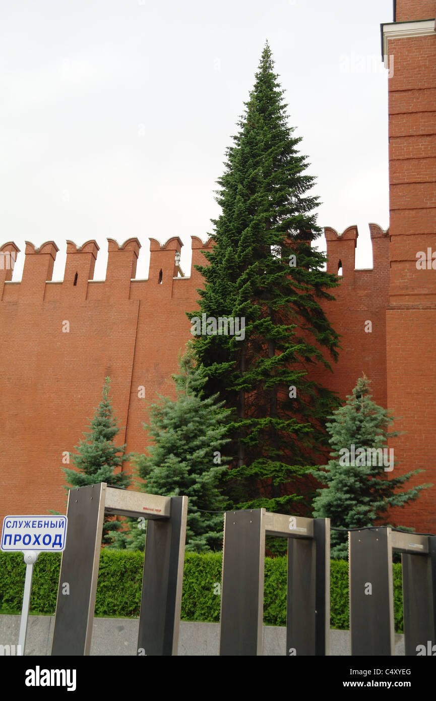 A Kremlin spruce near the Nikolskaya Tower. 3 мetal detectors on the front. Sign  'Pass-thru service only'. - Stock Image