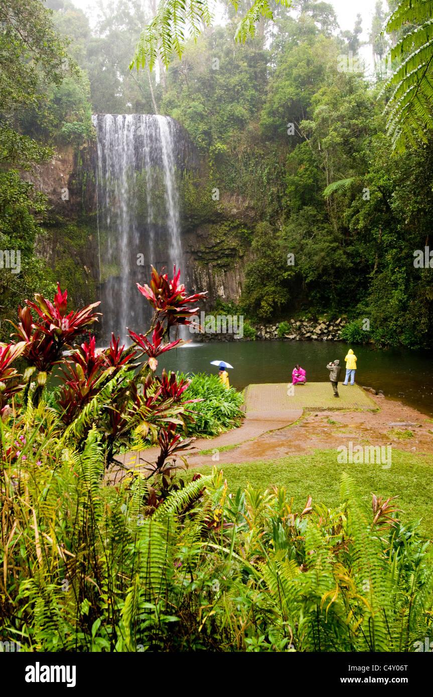 Millaa Millaa Falls in the Atherton Tablelands in north Queensland Australia - Stock Image