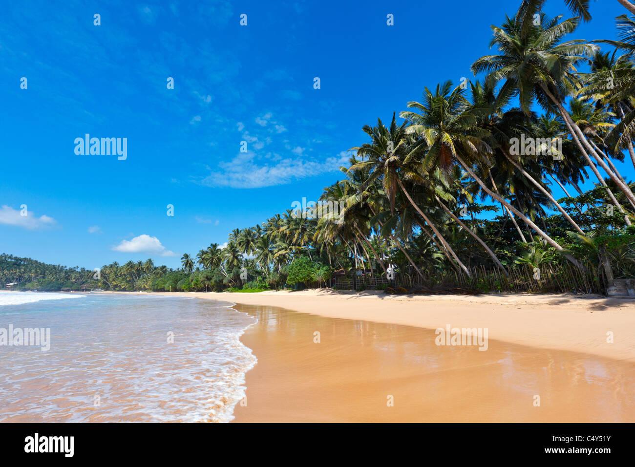 Tropical paradise idyllic beach. Sri Lanka - Stock Image