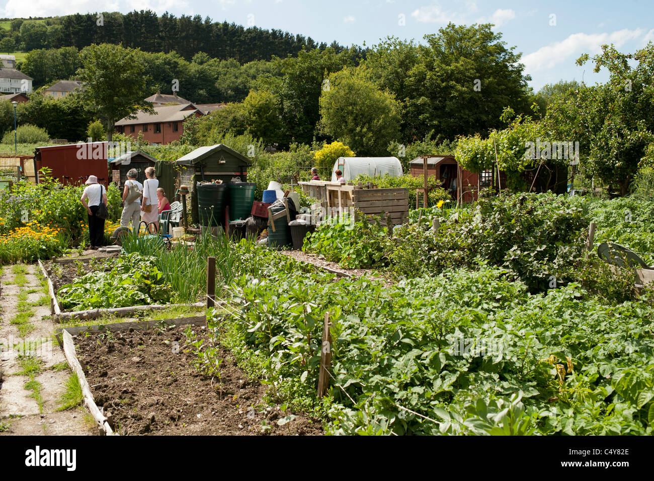 Charming Allotment Gardens Open To The Public On National Garden Society Open Day,  Aberystwyth Wales UK
