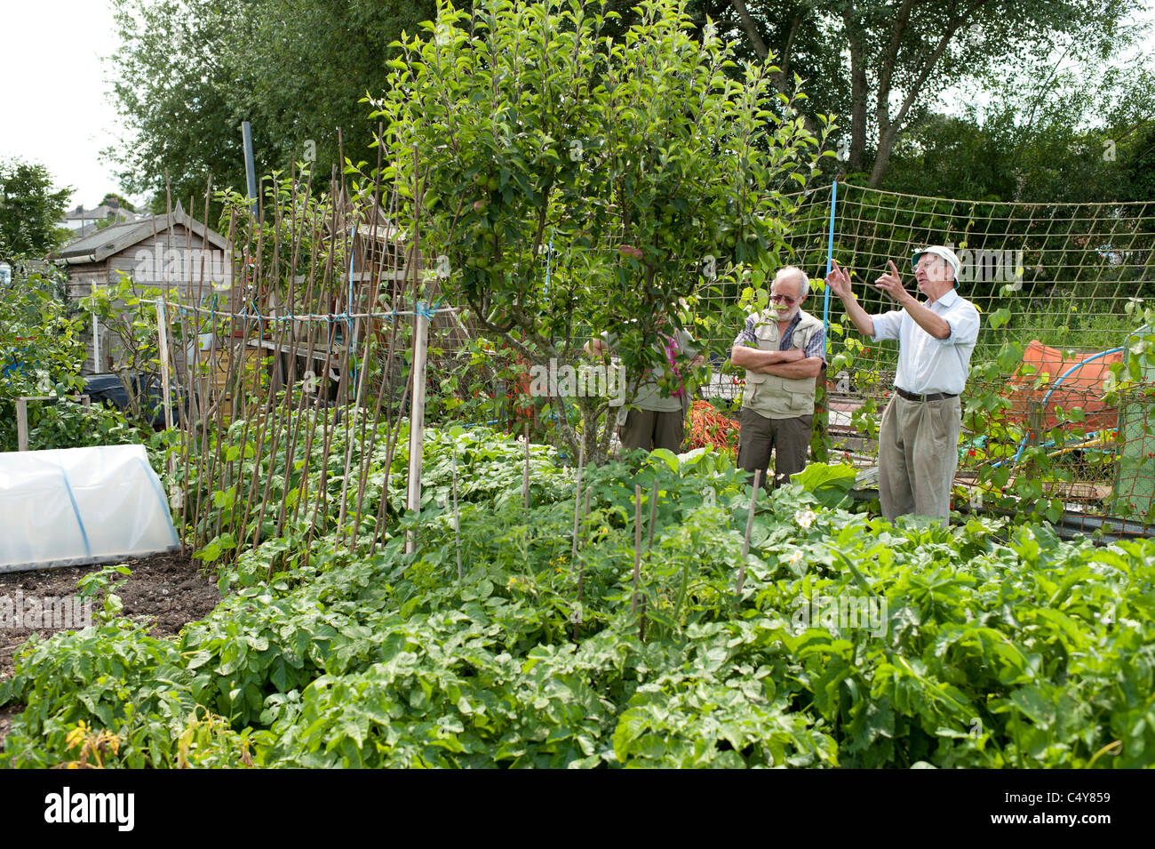 Allotment Gardens Open To The Public On National Garden Society Open Day,  Aberystwyth Wales UK