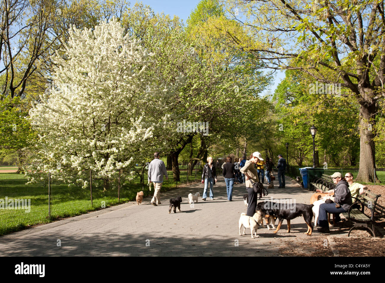 Dogs and Owners, Central Park, NYC - Stock Image