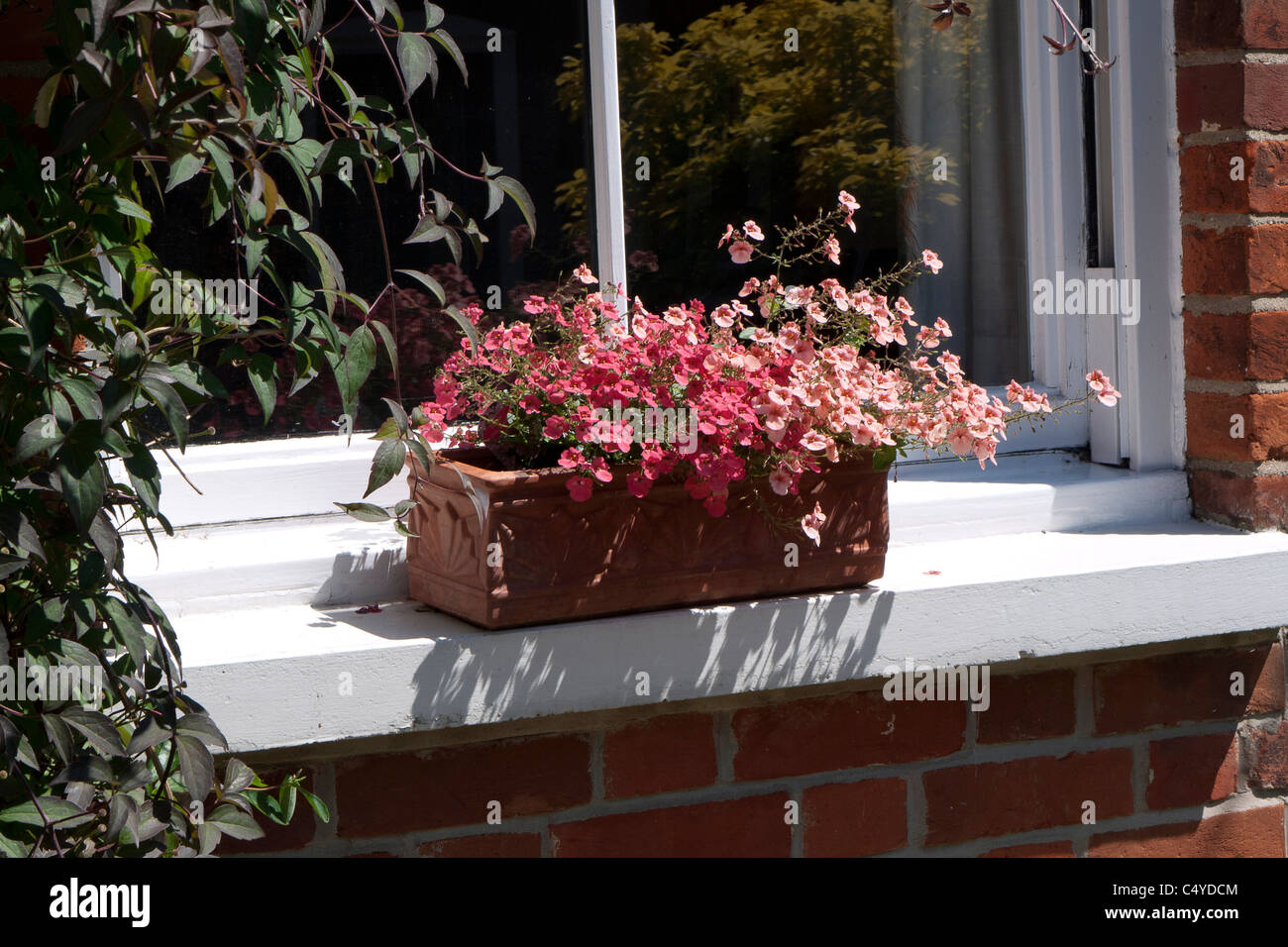 Terracotta Window box with summer Nemesia flowers on window ledge, England - Stock Image