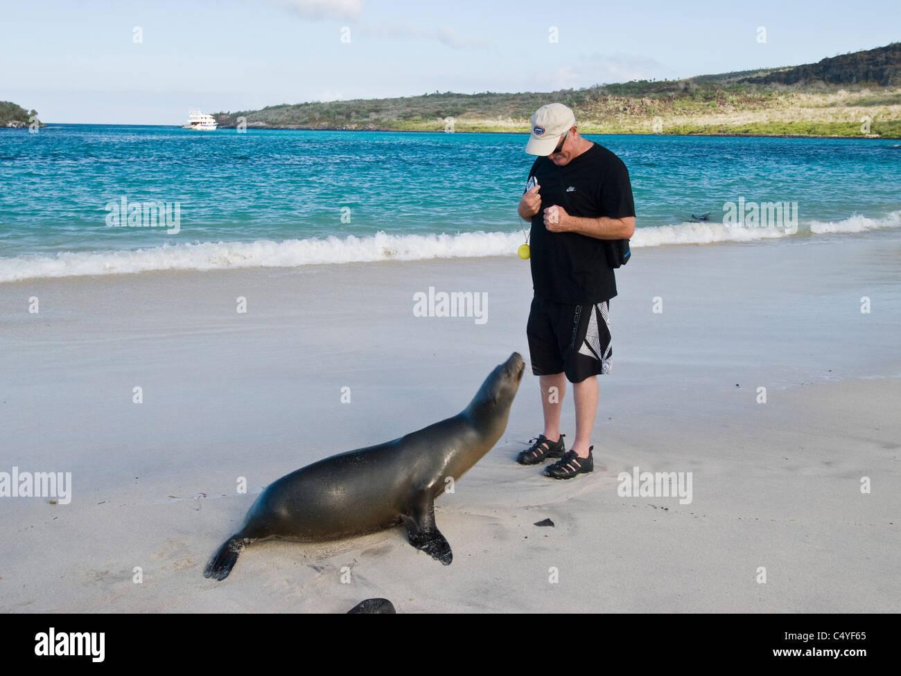 Galapagos sea lion and tourist on Santa Fe Island in the Galapagos Islands Ecuador - Stock Image