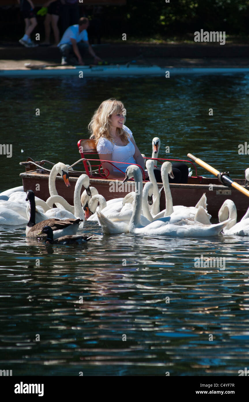 A pretty girl surrounded by Mute Swans on river Avon, Stratford, UK - Stock Image