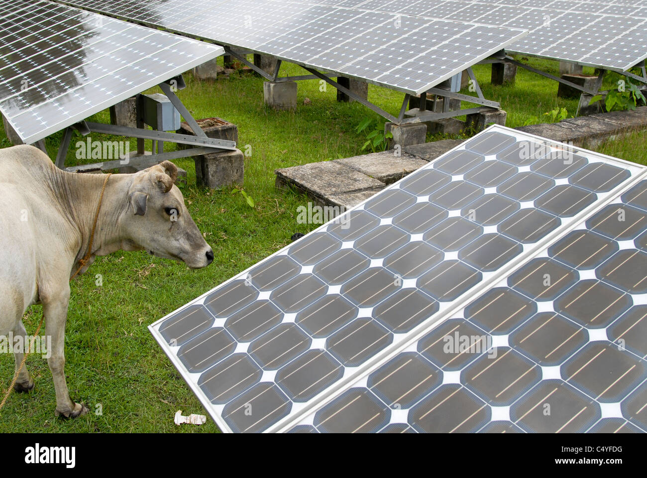 INDIA West Bengal , Sagar Island in Sundarban the delta of Ganga river , solar power station as off-grid system - Stock Image