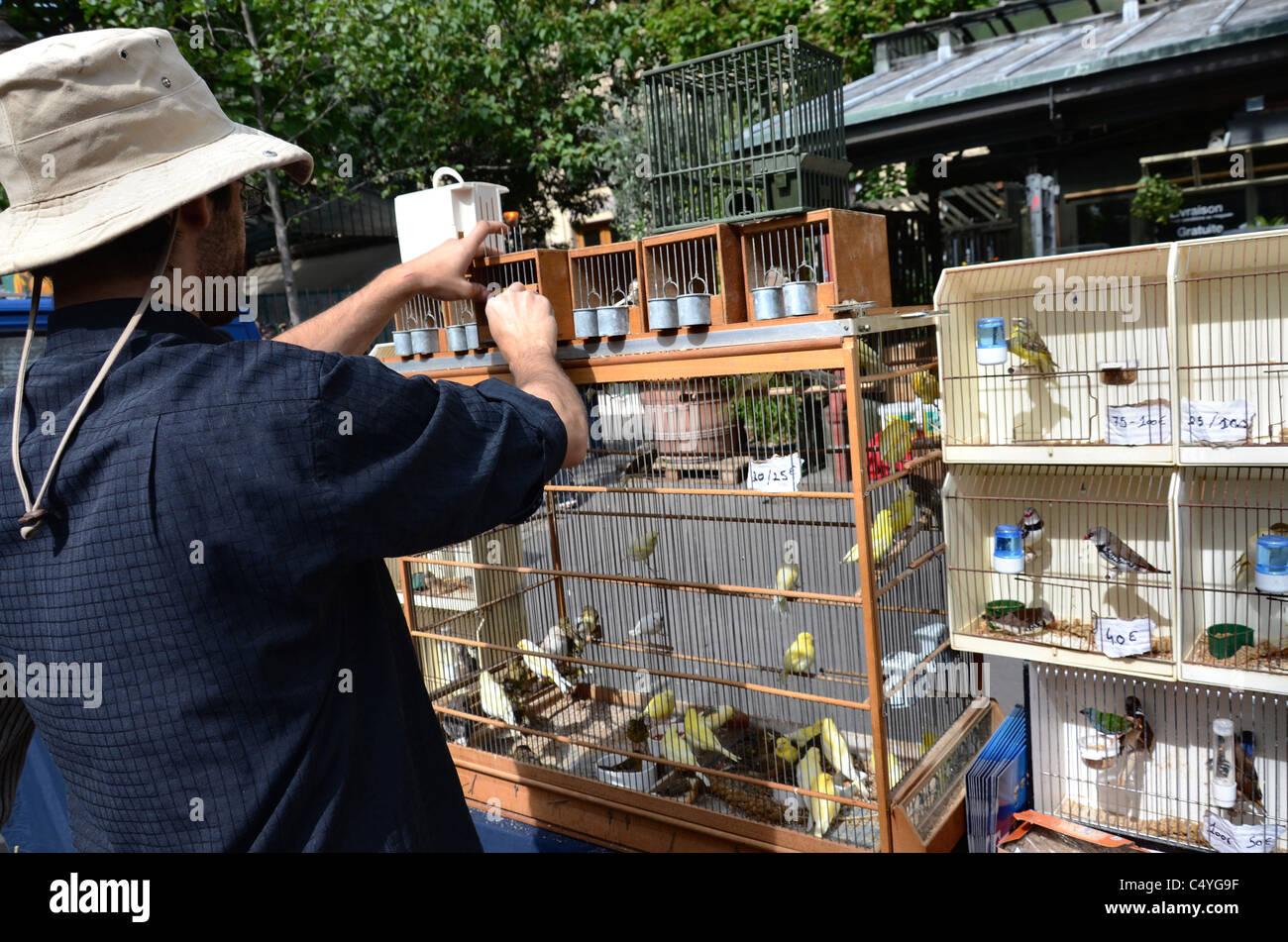 Marché aux Oiseaux: the Sunday morning bird market on the Ile St Louis in Paris, France. - Stock Image