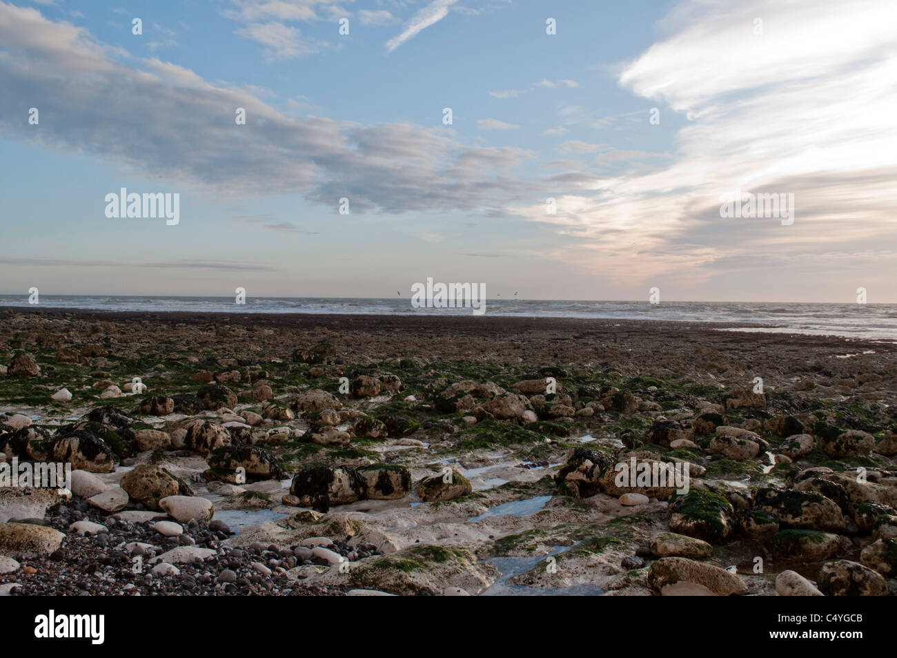 Birling Gap beach,  East Sussex, England UK. Coastline English channel Tide out - Stock Image