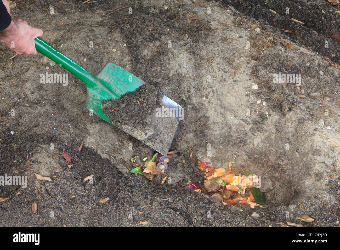 Covering kitchen scraps with soil. Part 5 of Trench Composting to improve soil quality series of images. - Stock Image