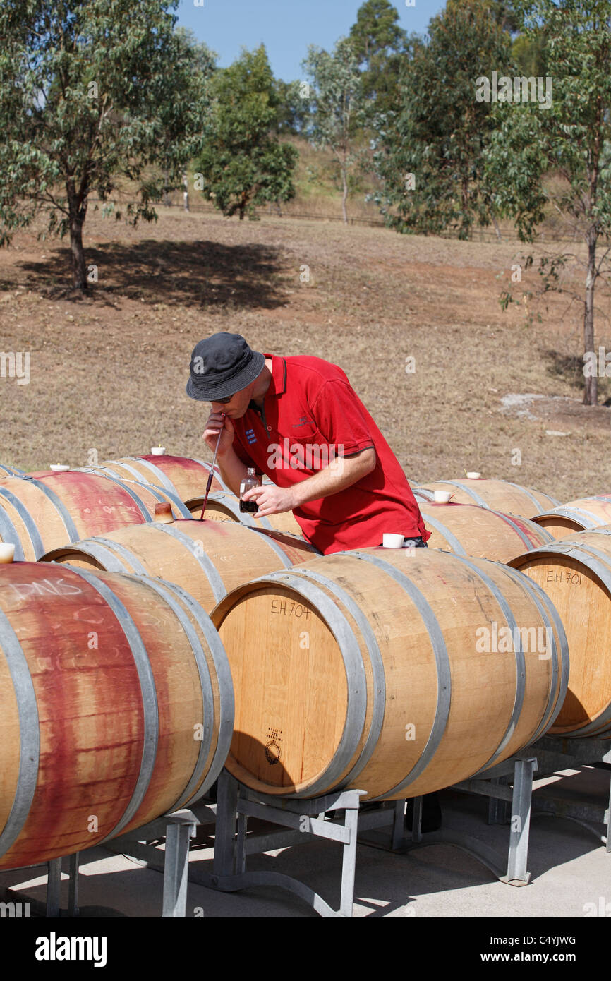 A Cellarmaster using a 'wine thief' to check the fermentation of red wine. Tempus Two winery, Hunter Valley, - Stock Image