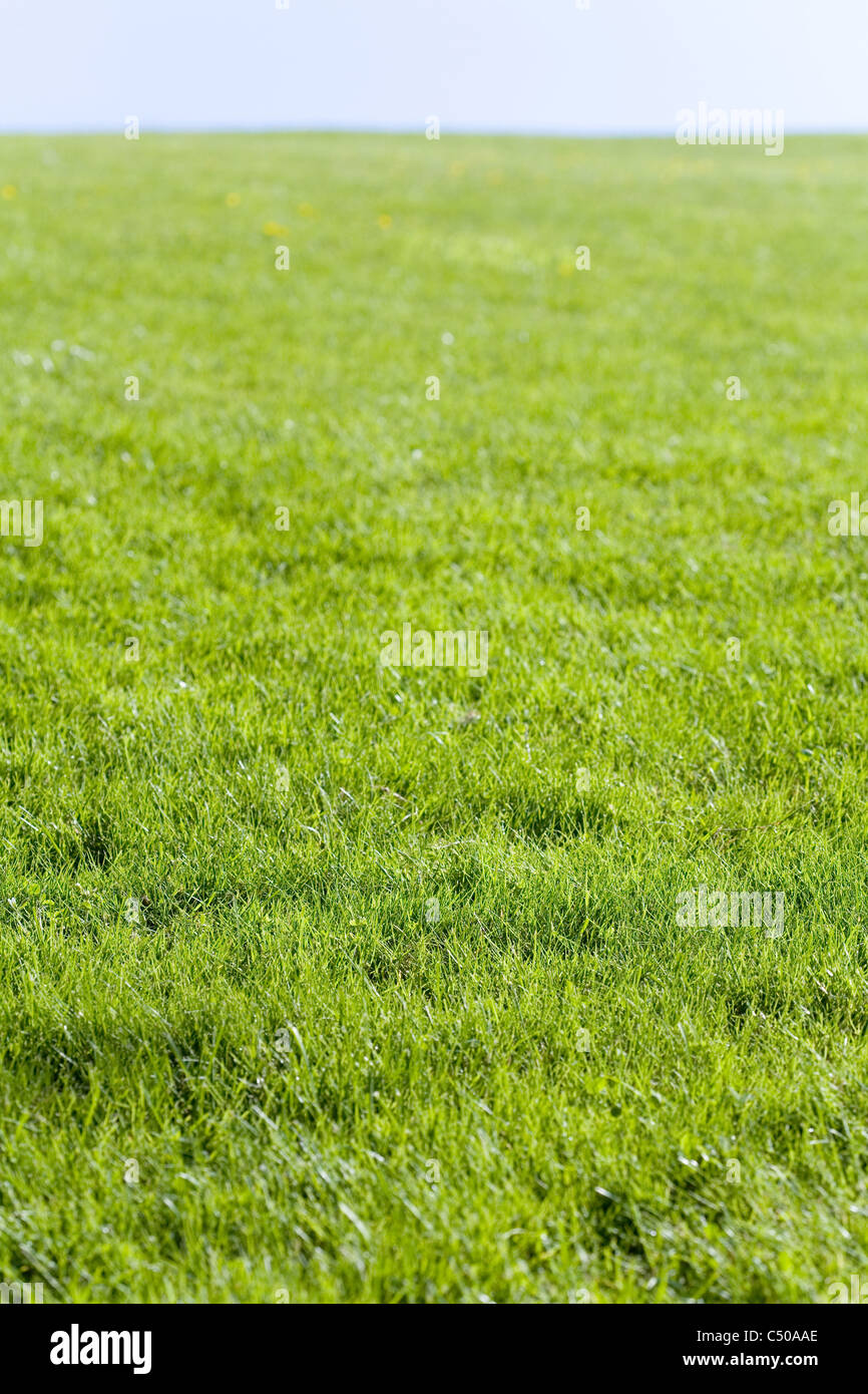 Green field and blue sky for background - Stock Image