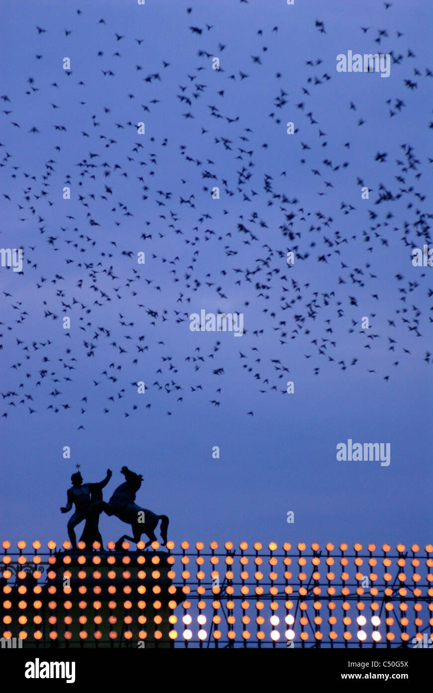 Berlin. Germany. Murmuration of Starlings above the Altes Museum, Lustgarten. - Stock Image