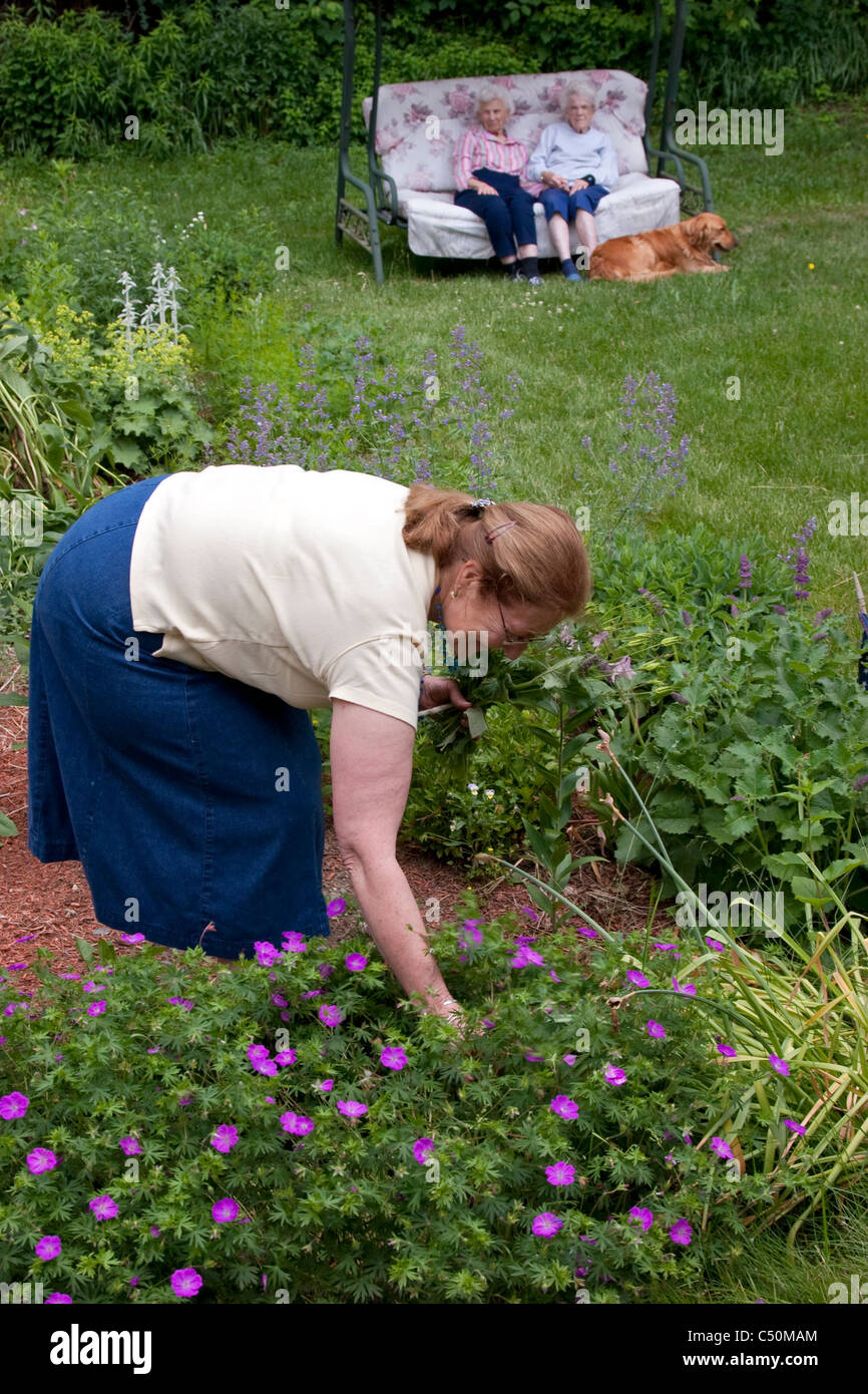 Woman Picks Flowers In Flower Garden While Two Elderly Woman And A Golden  Retriever Dog Watch