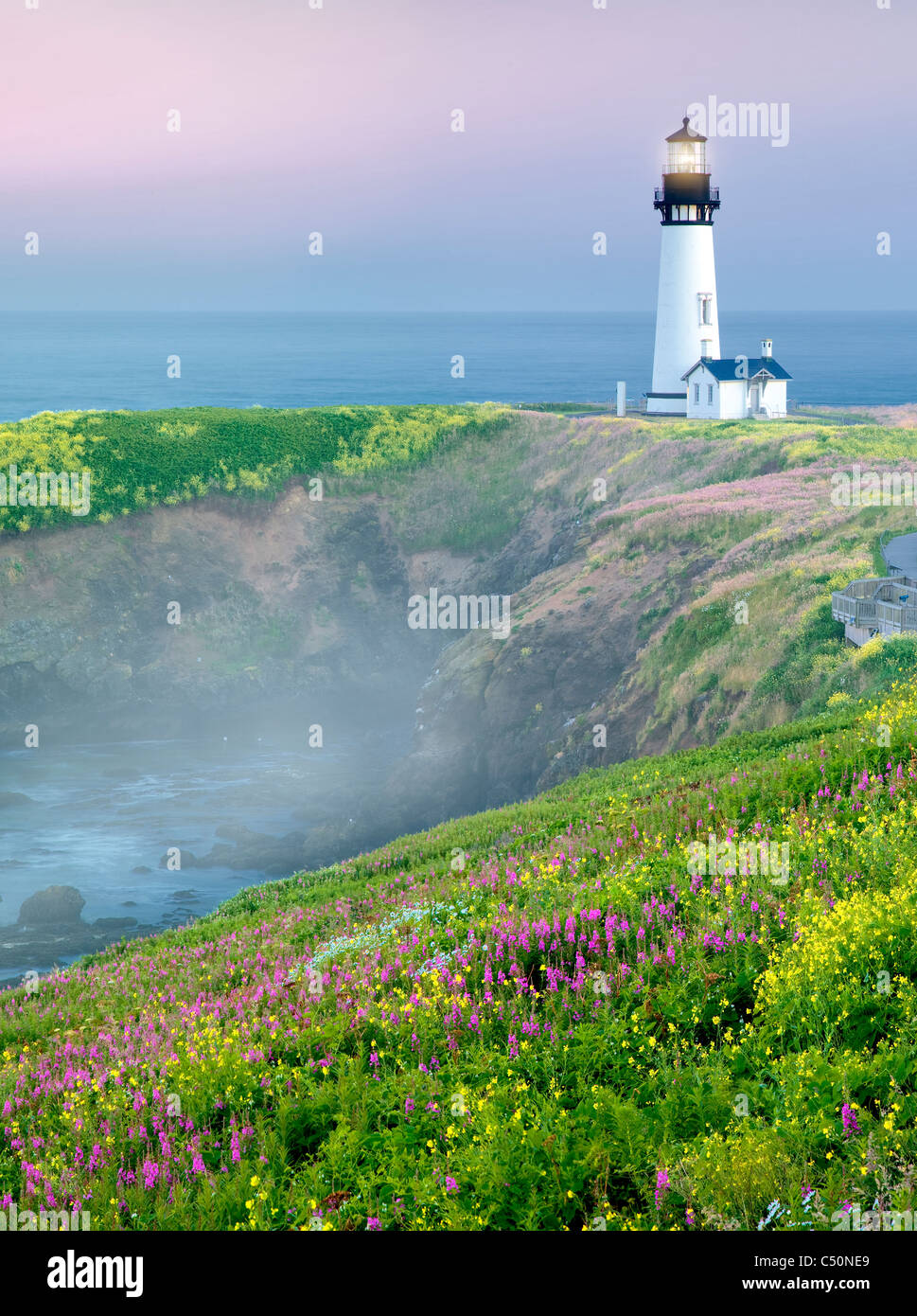 Yaquina Lighthouse with yellow mustard and fireweed. Yaquina Head, Oregon - Stock Image