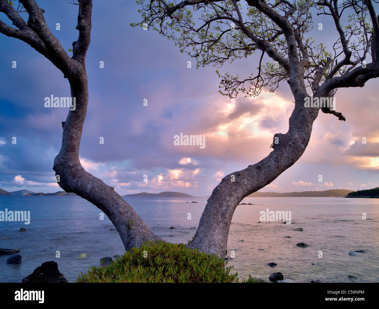 Tree framing ocean at Cruz Bay, St. John, Virgin Islands. - Stock Image