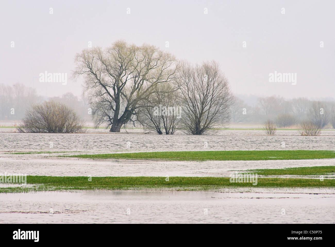 Elbe Hochwasser - river Elbe flood 01 - Stock Image