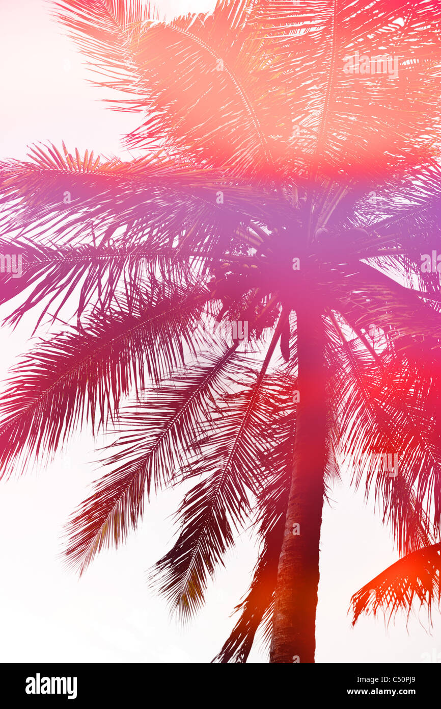 Abstract silhouette of a beautiful coconut palm tree. - Stock Image