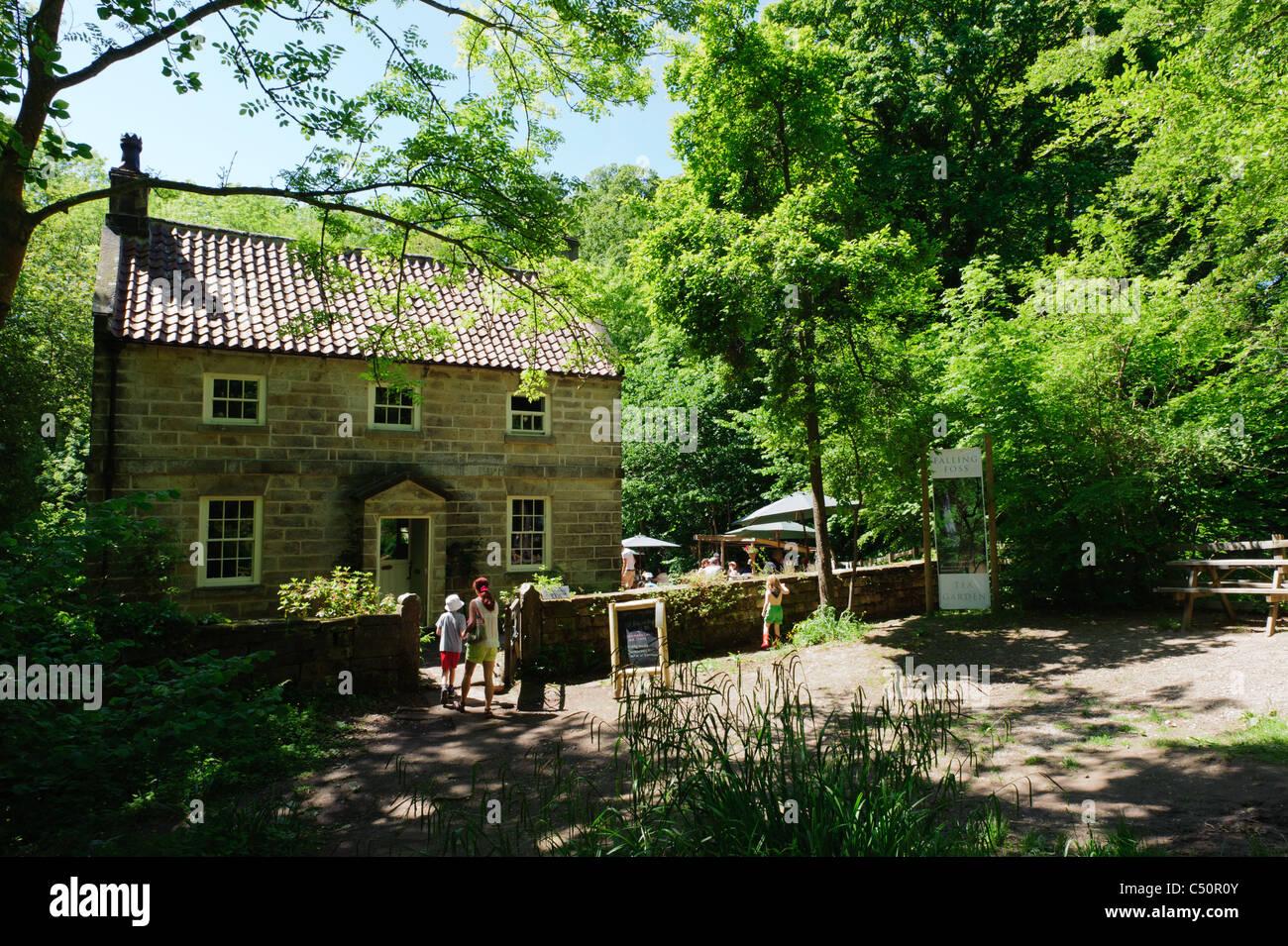 Falling Foss Tea Garden, Sneaton Forest - Stock Image