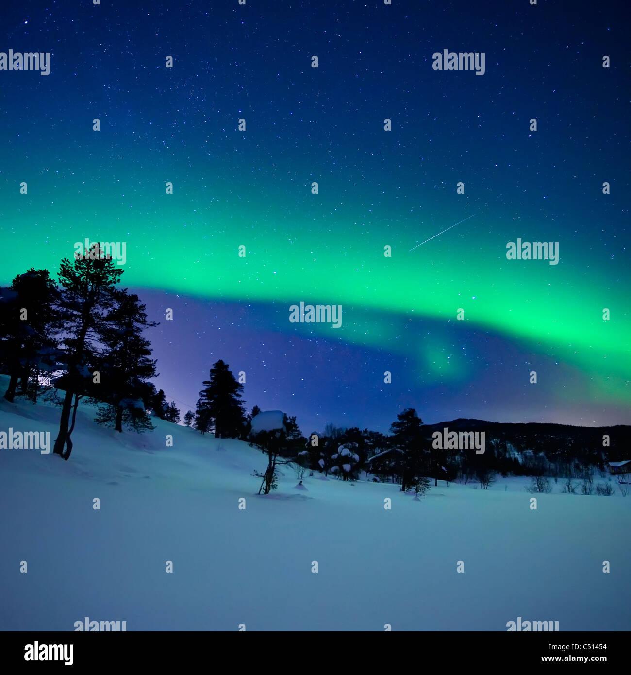 Arctic Woods Stock Photos & Arctic Woods Stock Images