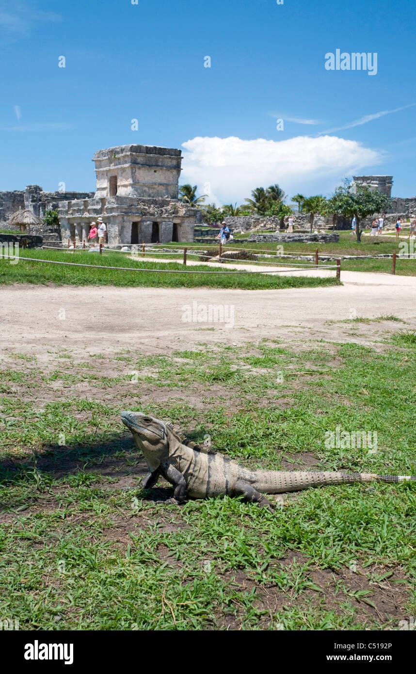 Maya-Ruinen in Tulum, Quintana Roo, Yukatan, Mexiko, Maya ruins, Tulum ruins, Quintana Roo, Yukatan, Mexico - Stock Image