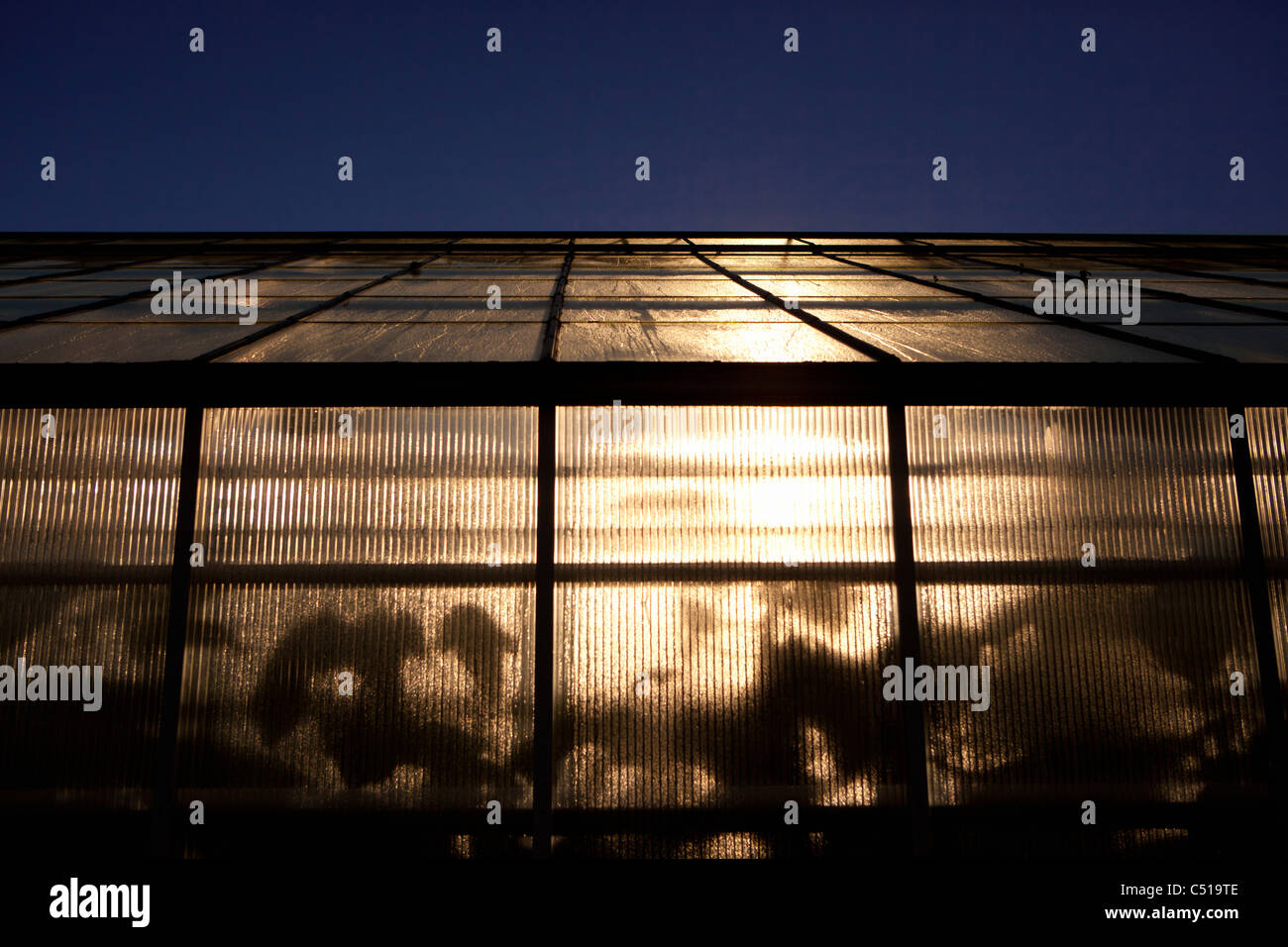 Peering into a greenhouse's opaque glass window and recognizing the shadow and outline of leaves - Stock Image