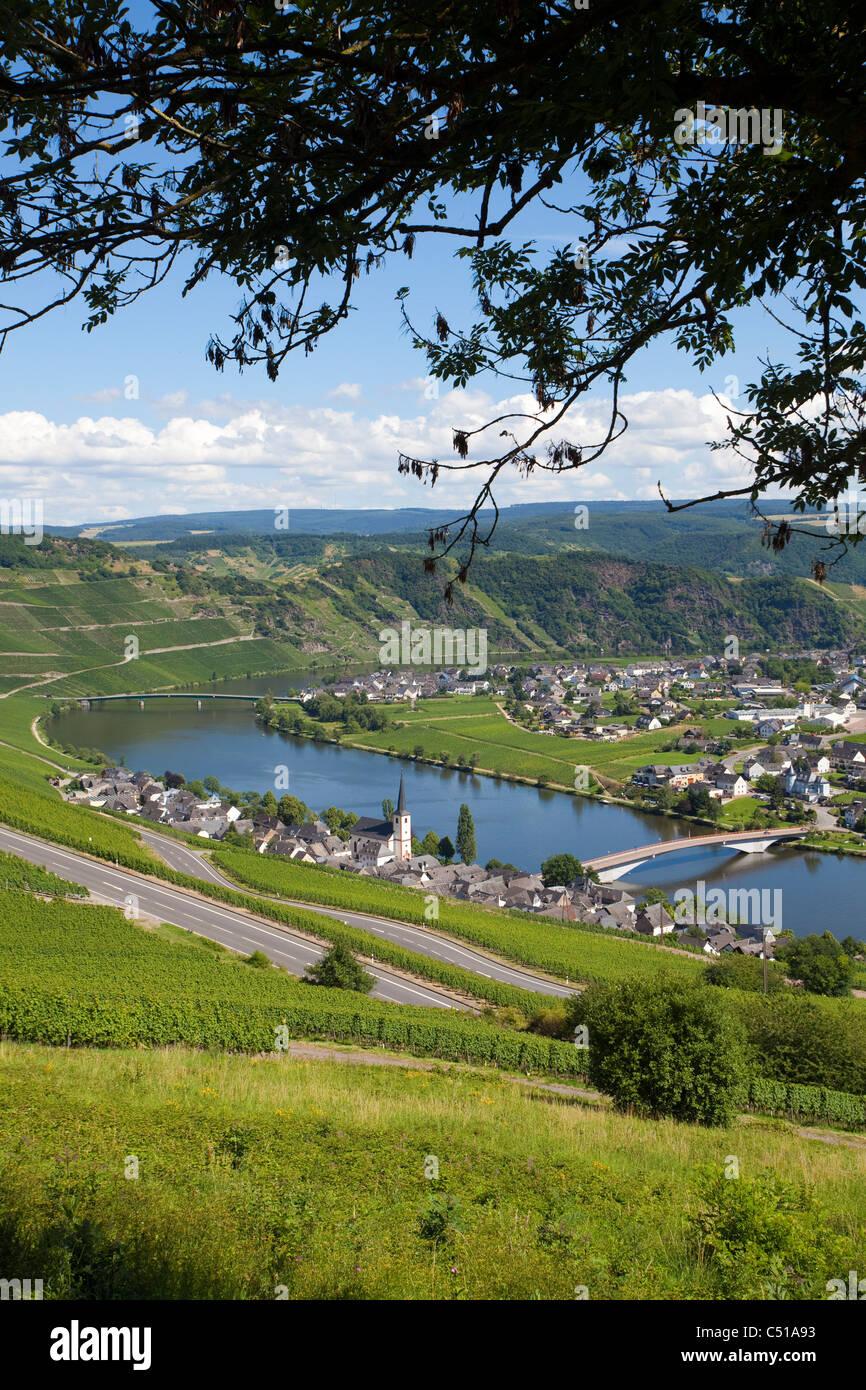 Piesport an der Mosel Mittelmosel, Rheinland-Pfalz, Deutschland, Moselle Mosel river Rhineland-Palatinate Germany - Stock Image
