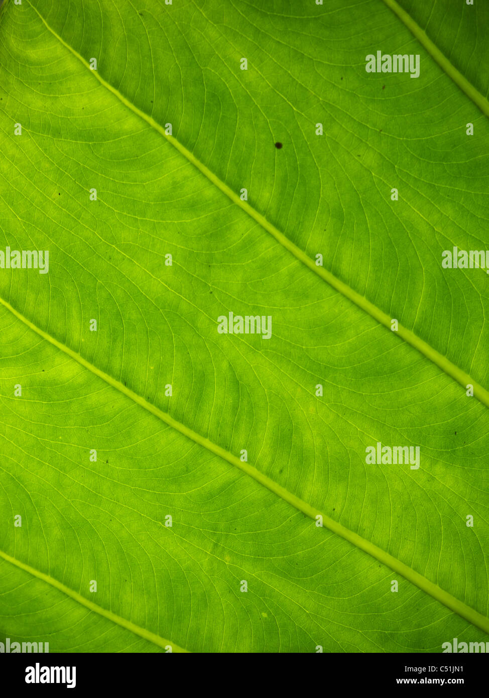 tight shot of palm leaf - Stock Image
