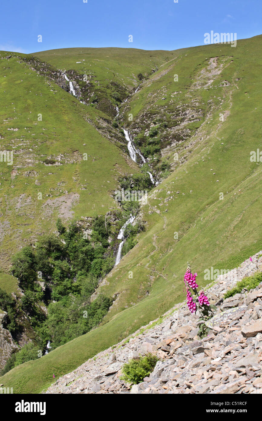 Cautley Spout waterfall in the Howgills Cumberland England UK seen with a wild foxglove in the foreground - Stock Image