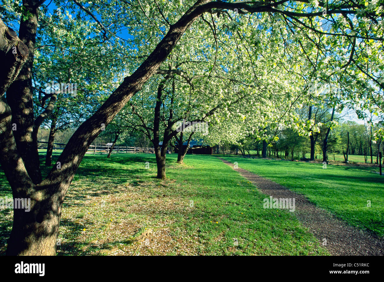 Spring Bloom in an Orchard, Historic Wicks Farm, Jockey Hollow State Park, New Jersey - Stock Image