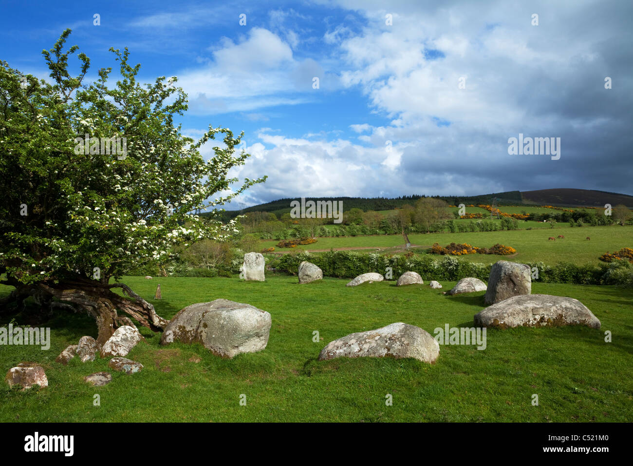 The Piper's Stones or Athgreany stone circle (1400-800 BC) is a bronze age stone circle of 16 Granite Boulders - Stock Image