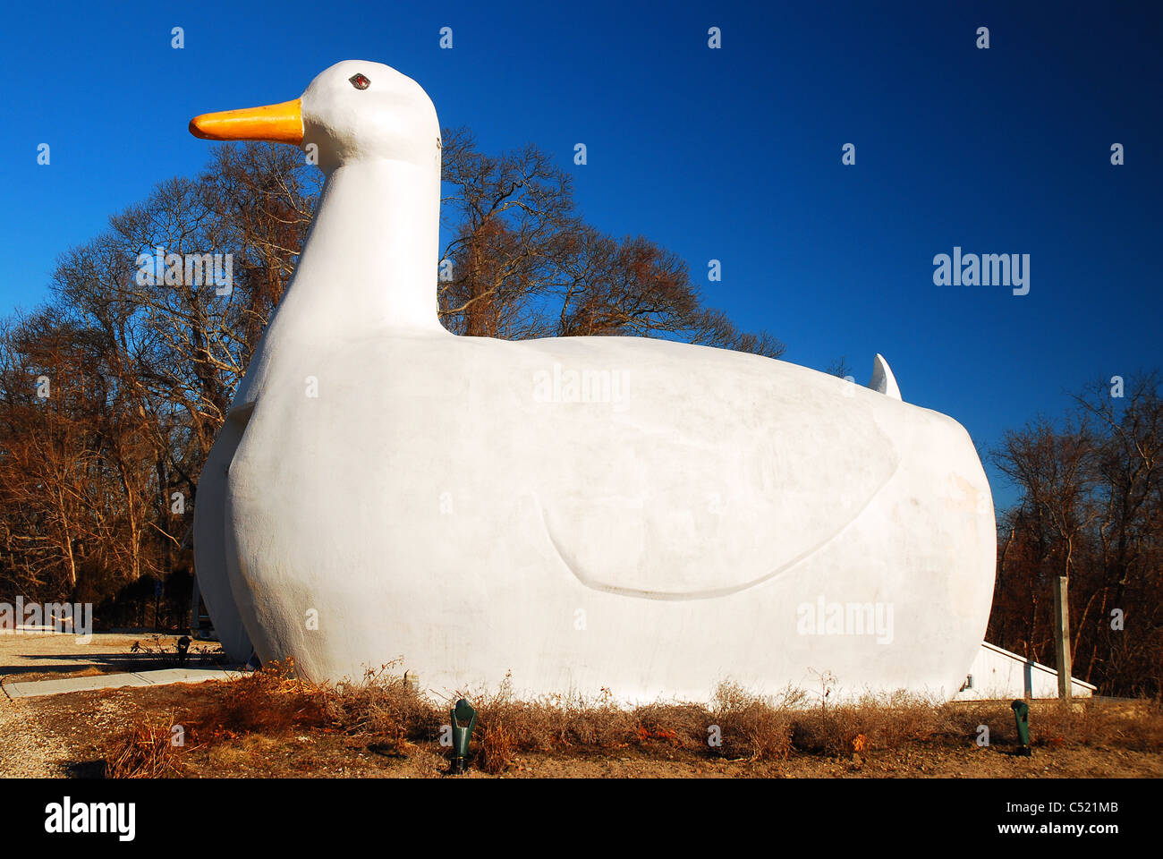 The Big Duck, a roadside attraction in Flanders, Long Island, NY - Stock Image