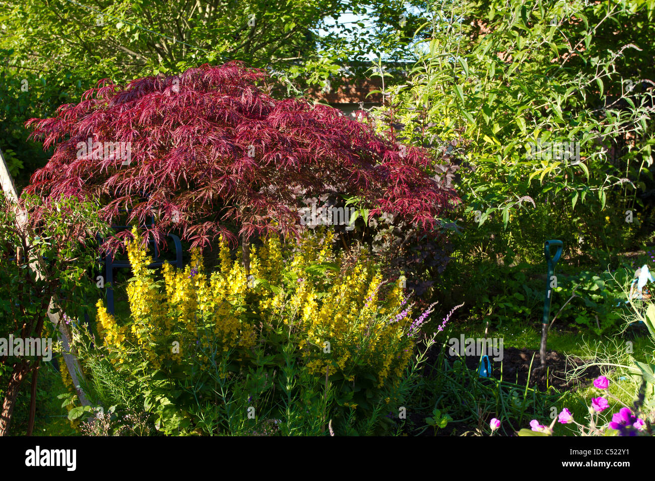 Overgrown English Garden Packed With Flowers Shrubs And Trees