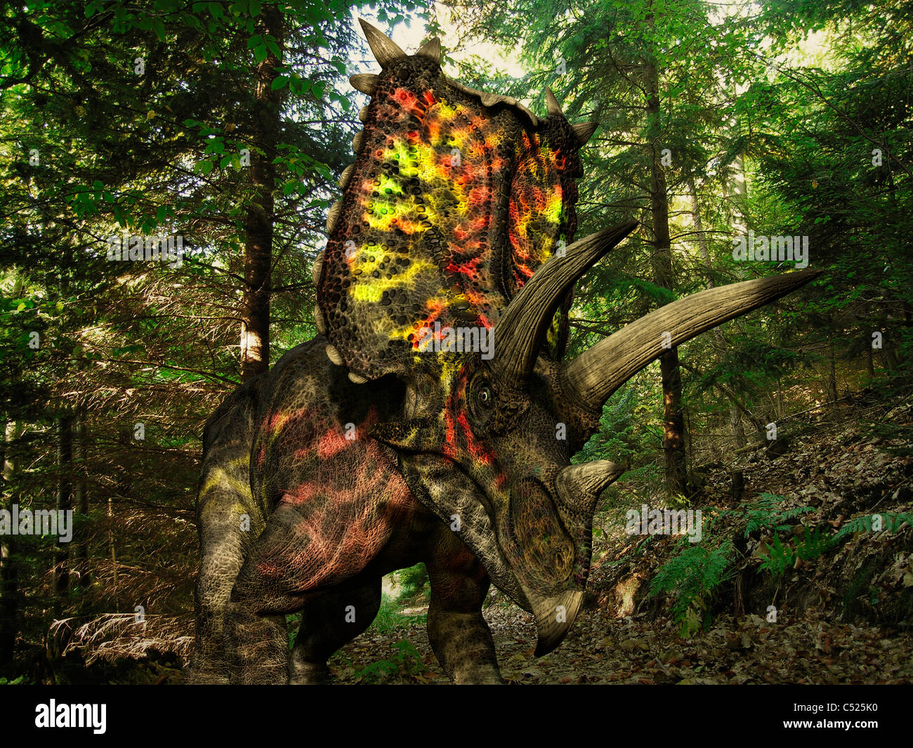 A colorful Pentaceratops wanders a Cretaceious forest. - Stock Image