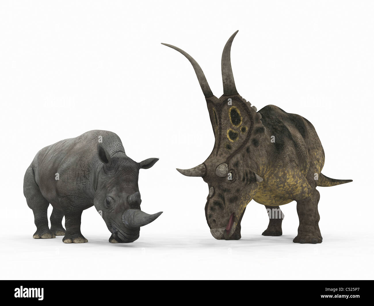 An adult Diabloceratops compared to a modern adult White Rhinoceros. - Stock Image
