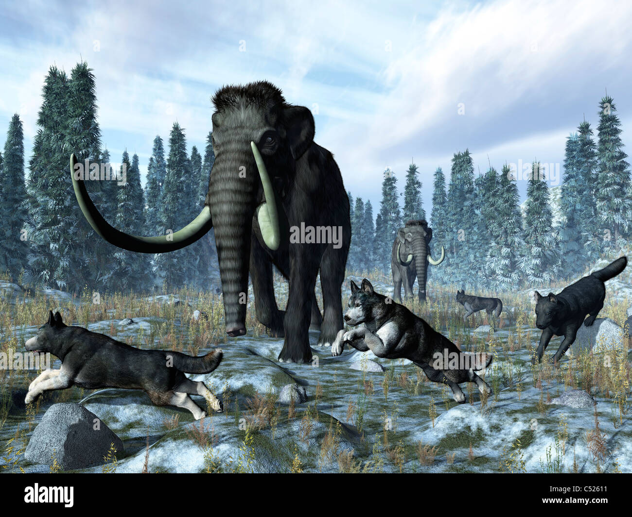 A pack of dire wolves crosses paths with two mammoths during the Upper Pleistocene Epoch. - Stock Image