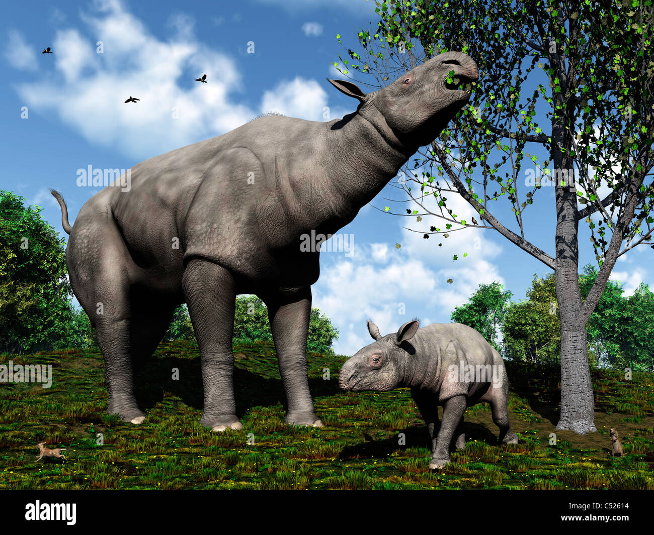 A Paraceratherium mother grazes on leaves and twigs of a poplar tree. - Stock Image