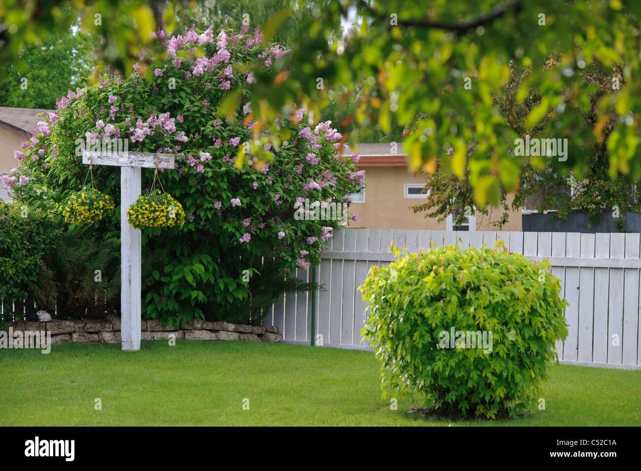 Suburban backyard in with flowers in Lethbridge Alberta - Stock Image