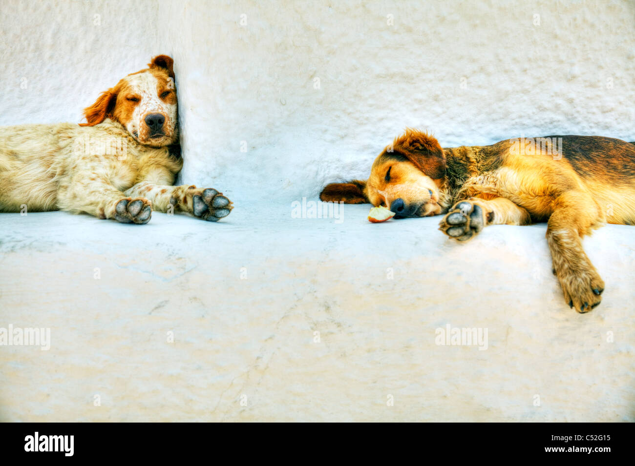 Thira on iconic Greek island of Santorini, typical Greece, two old dogs sleep in midday heat tired and sleepy - Stock Image