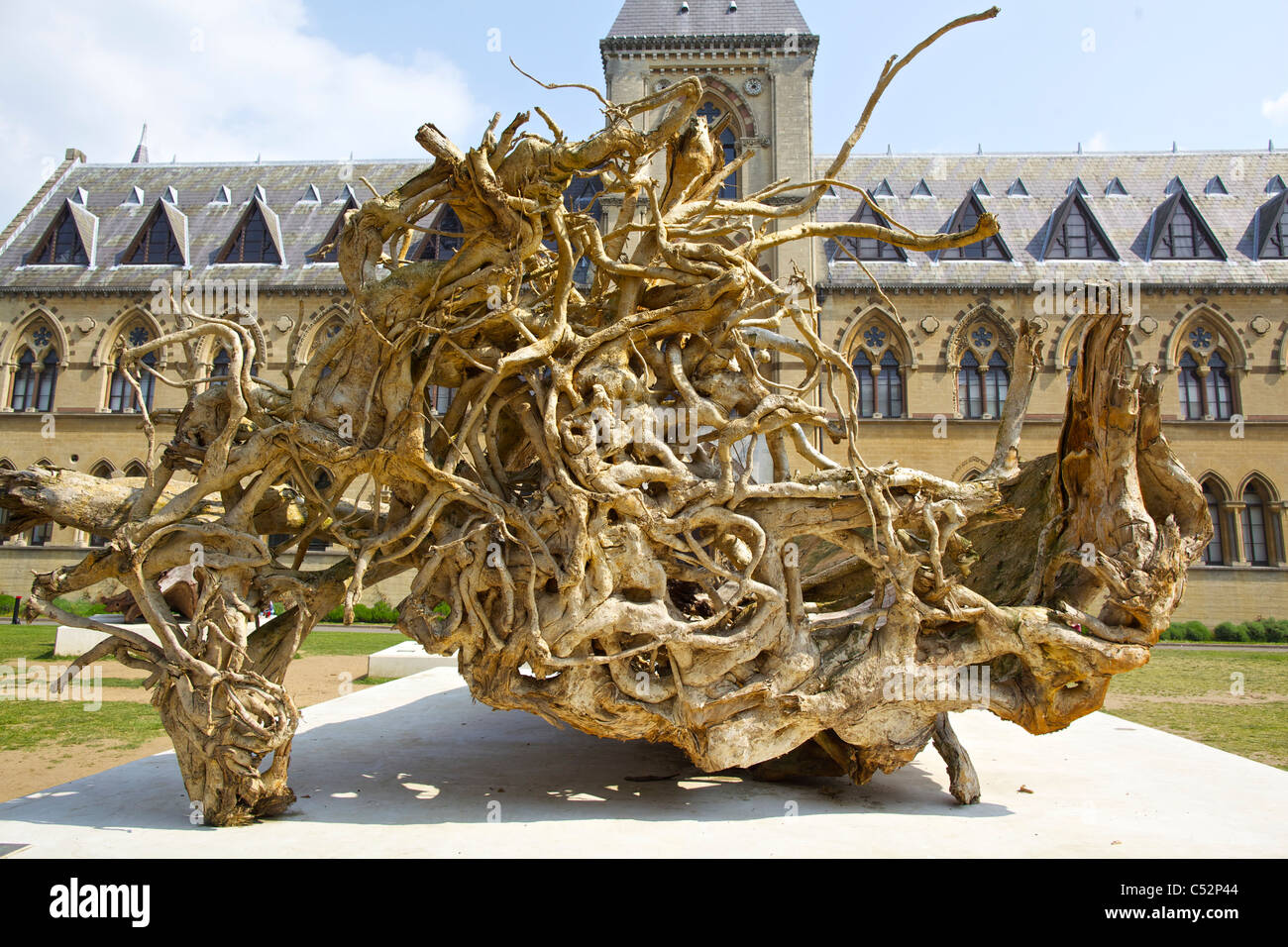 Tree roots in Ghost Forest exhibition at Oxford University's Museum of Natural History and the Pitt Rivers Museum, - Stock Image