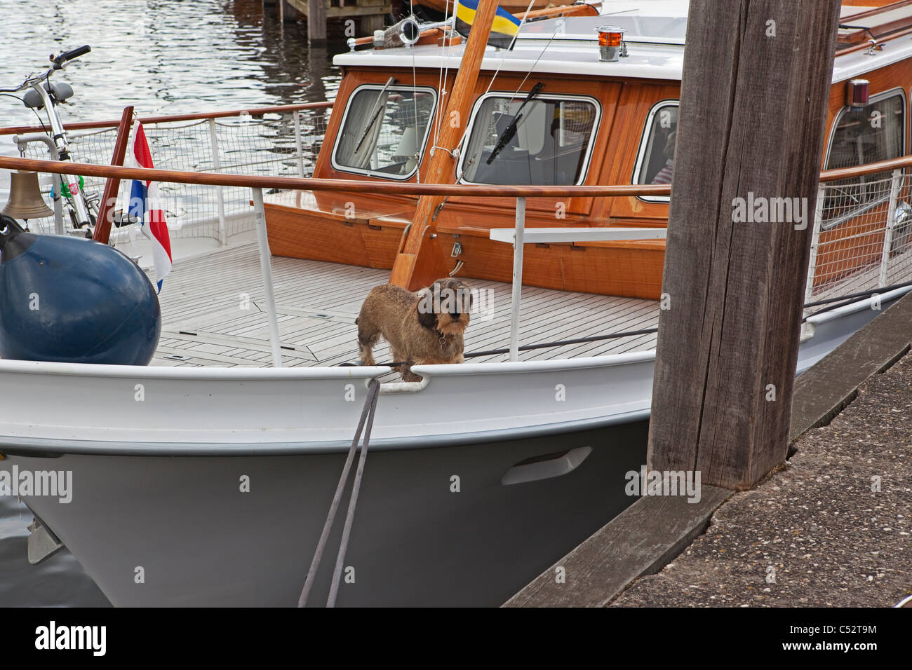 Dog on boat in Elburg Harbour - Stock Image