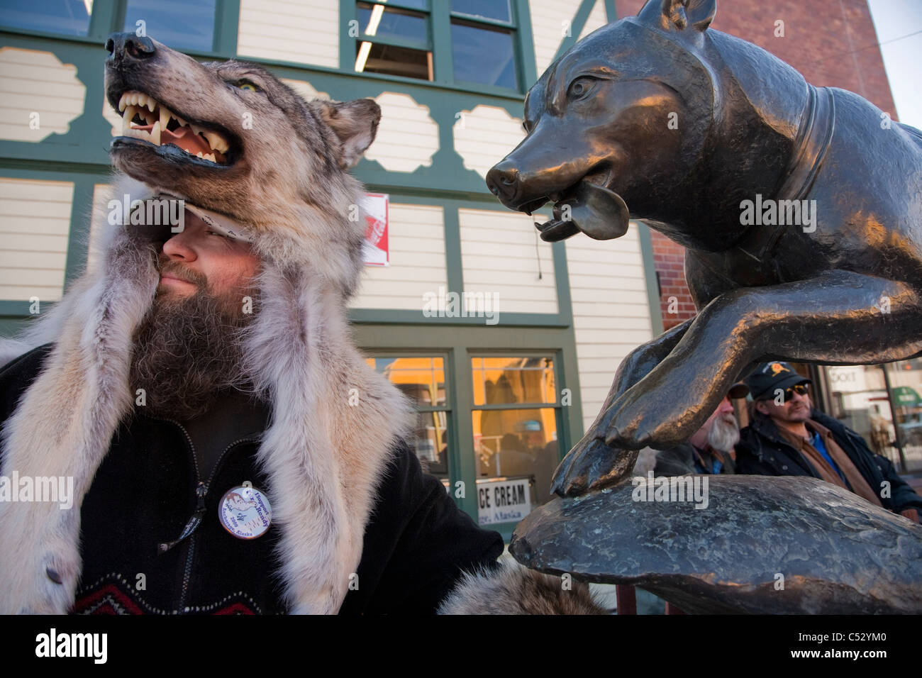 Man wearing a wolf hat stands next to a bronze statue of a sled dog in downtown Anchorage during Fur Rendezvous, - Stock Image
