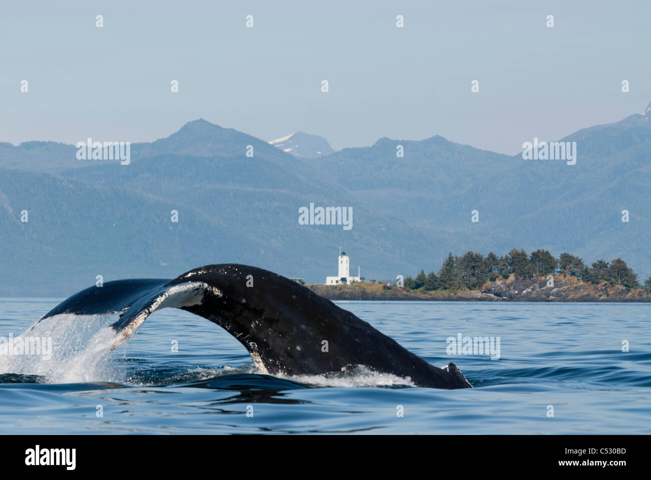 Humpback whale diving with fluke visible and Five Finger Lighthouse in the background, Frederick Sound, Inside Passage, - Stock Image