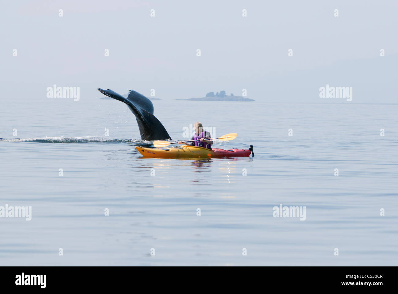 Humpback whale surfaces near a woman sea kayaking in Frederick Sound, Inside Passage, Southeast Alaska, Summer Stock Photo